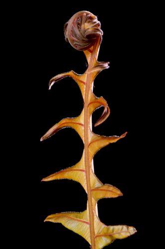 Red Leaf Tree Fern Print